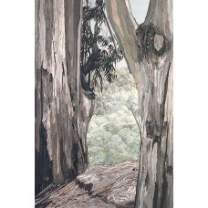 Eucalyptus I<p> <h8>Open Edition</h8>
