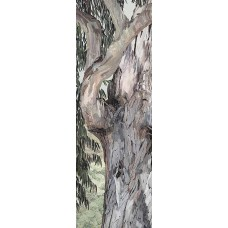 Eucalyptus II<p> <h8>Open Edition</h8>